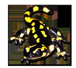 L'attribut alt de cette image est vide, son nom de fichier est salamandre-petite.png.